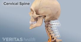 Adult-Cervical-Spine-anatomy-overview